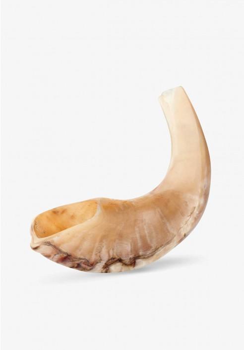 small_polished_sheep_horn_shofar